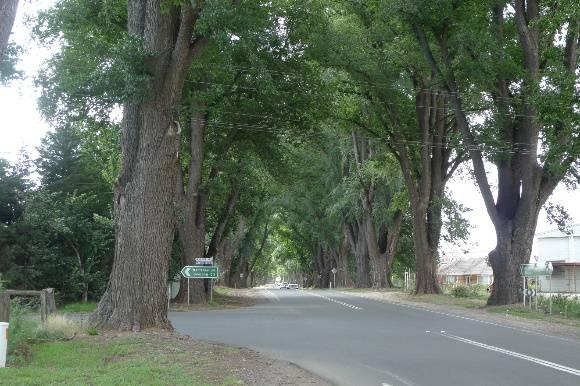 4957_Bacchus Marsh Avenue of Honour_25 December 2009_HV_039.JPG